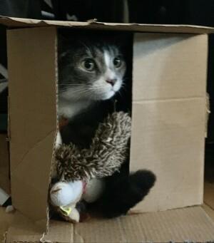 Tibou in a box
